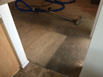 Carpet Cleaning in progress