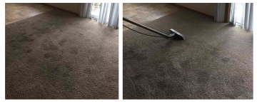 Carpet Cleaning | Animal Stains