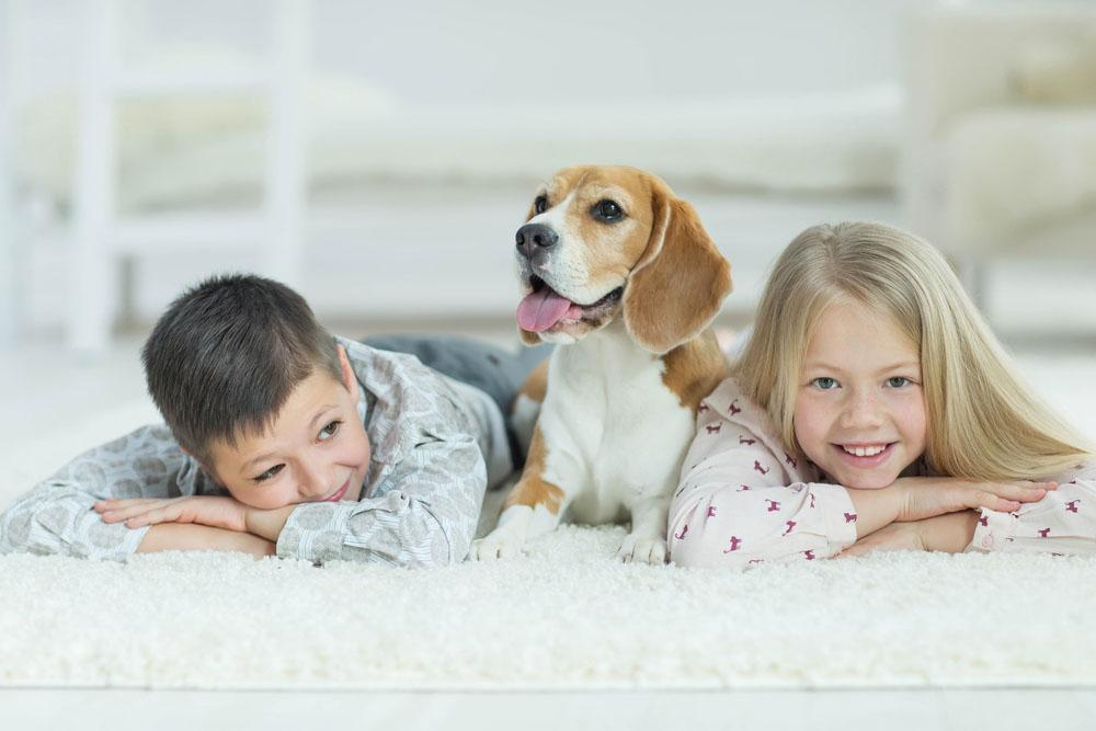Professional Carpet Cleaning Nampa, Idaho